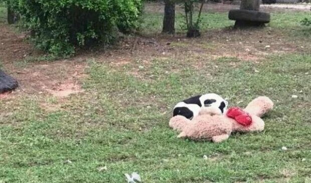 Opuštěný pes objal medvídka... Nehýbal se - a dobrovolnice si uvědomila, že je pozdě