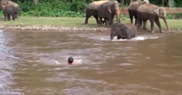 Slon zachránil muže, který spadl do řeky: video obletělo celý internet