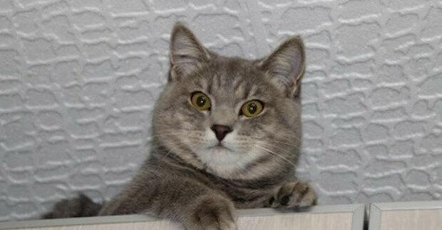Majitelé dali kočku do dobrých rukou a o dva roky později se k nim kočka vrátila