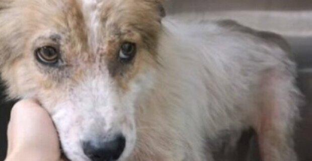 Starý pes se schovával ve starých pneumatikách a ani si nemyslel, že může být zachráněn