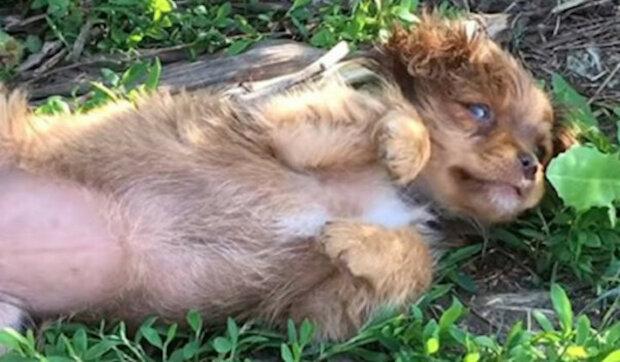 Dobrovolníci přijeli štěně zachránit, ale v křoví na ně čekala celá chlupatá rodina