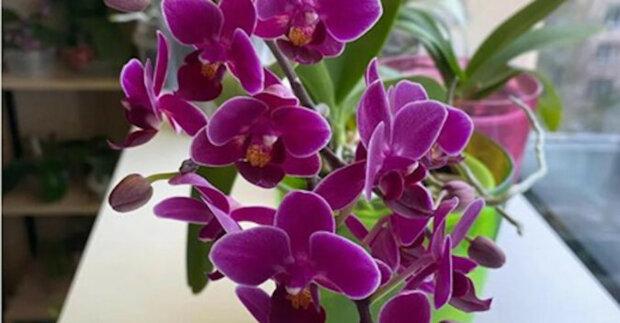 """Požádal jsem pracovníky květinářství o """"recept"""" na krmení květin. Po použití tohoto triku orchideje kvetou"""