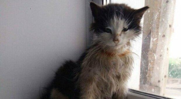Historie kočky bez domova, která se proměnila z ošklivého káčátka na majestátní kočku
