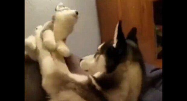 Pes se urazí na hračku, protože mu neopětuje polibek. Video