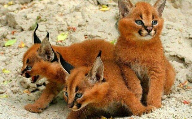 Co jsou zač tyhle roztomilá koťata, do kterých se hned zamilujete?