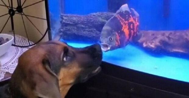 Boj mezi rybami v akváriu a psem bez výchovy dobývá internet. Video