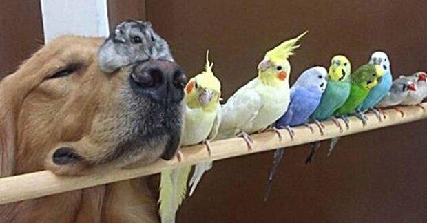 Zábavné fotky ze života lidí, kteří mají doma více než tři zvířata