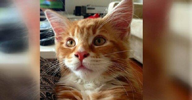 Když žena vzala 12-týdenní kotě k sobě domů, vypadalo hrozně. Po roce ale zjistila, jak vyjímečná kočka to vlastně je