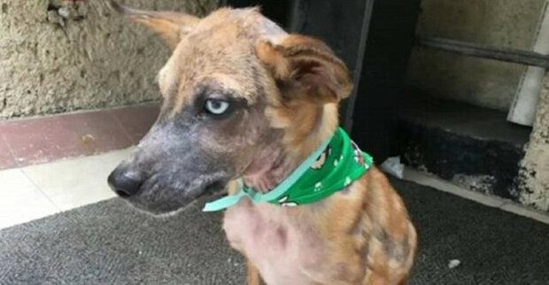 Nemocný a hladový pes, který nesměle postával na silnici a čekal, až u něj zastaví alespoň jedno auto