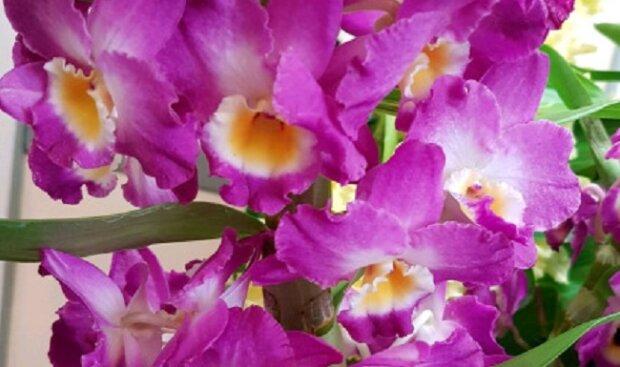Proč pěstovat orchideje právě v ložnici? Důvod je jednoznačný