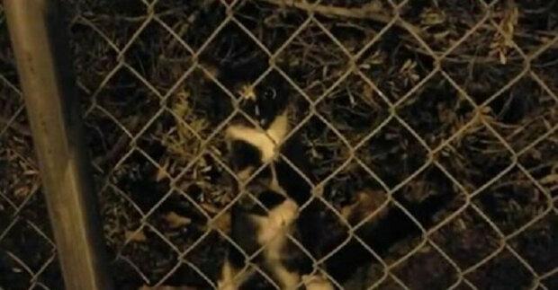 Muž začal v práci krmit toulavé kotě a nakonec se ho rozhodl adoptovat