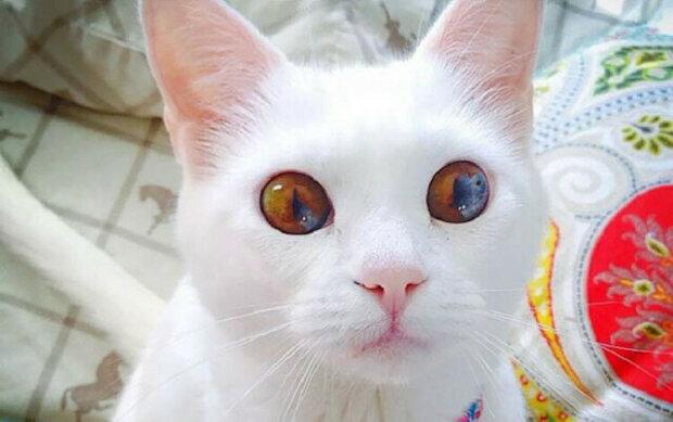 Top 10 nejkrásnějších koček na planetě Zemi