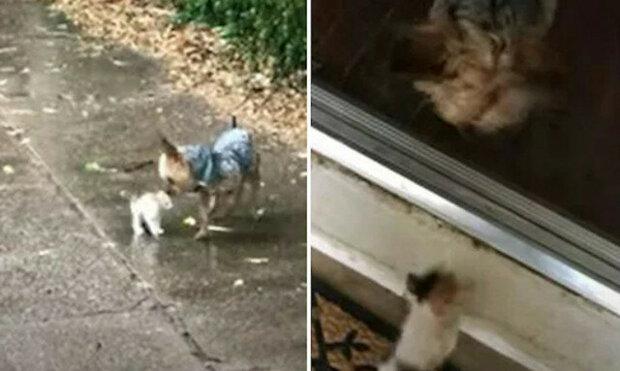 Pes zachrání malé kotě plačící v dešti
