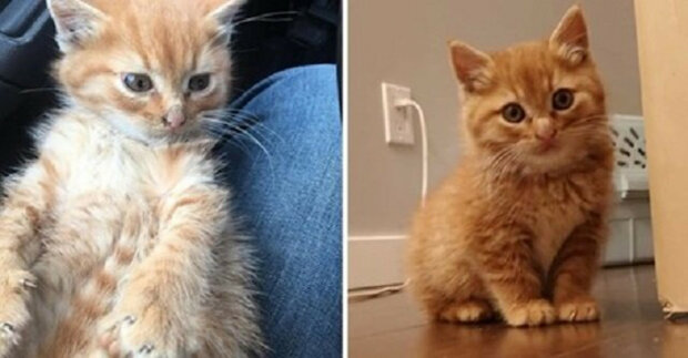 Divoké kotě poprvé zažilo lidské objetí a pochopilo, jak příjemný pocit to je