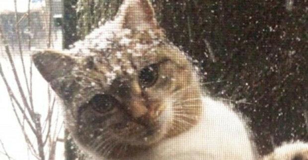 Dívka za oknem uviděla prochladlou kočku s koťaty