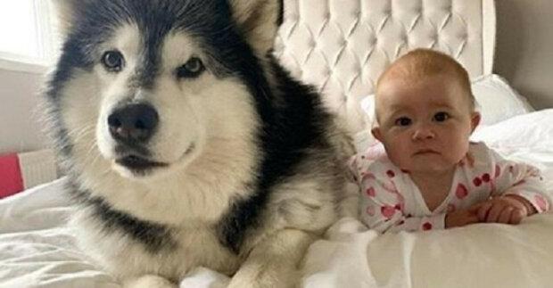 Příběh o tom, jak dva psi a kočka poznali novorozence