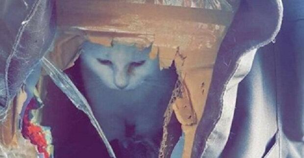 V roztrhané lepenkové krabici byla kočka. Ale s příchodem zimy na něj čekala změna