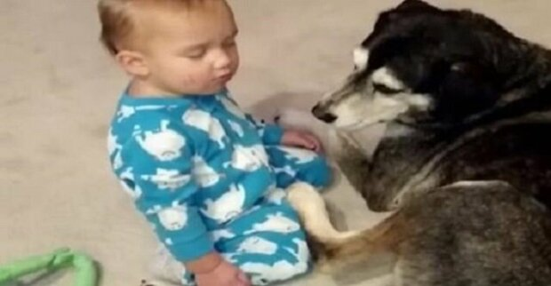 Chlapec právě usnul sedíc vedle psa. Ale počkejte na to, co se stane v čase 0:22