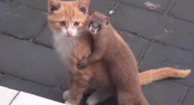 Úžasné přátelství mezi kočkou a lasičkou, které zaujalo celou síť