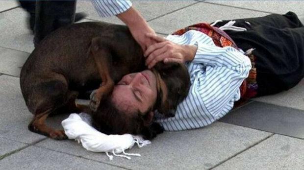 """Do představení zasáhl zatoulaný pes, který """"zachránil"""" herce a dojal všechny diváky"""