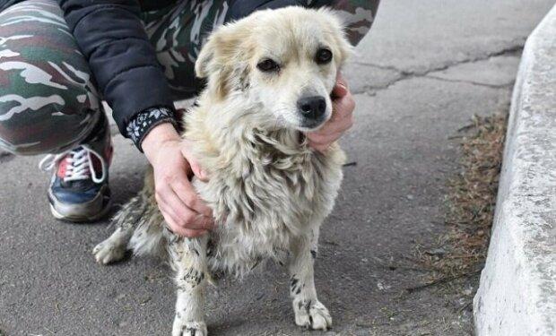 Po koupeli a novém sestřihu se malý pes, který byl na ulici, prakticky znovu narodil a našel nový domov