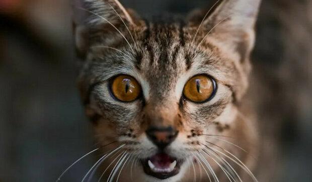 """""""Srdcervoucí"""". Majitel umístil skrytou kameru na sledování koček"""