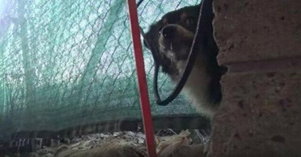 Hladový pes odmítal jíst, dokud neviděl své děti