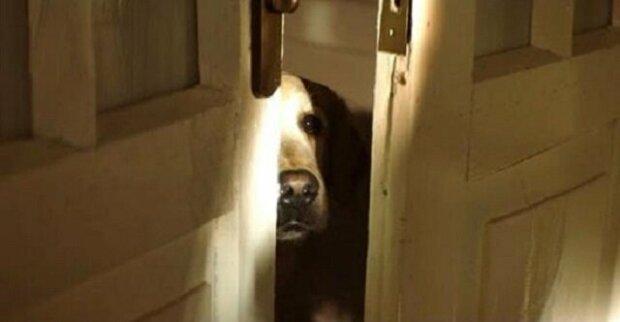 Krátký, ale dojemný film o psech. Tvůrce doufá, že video změní postoj lidí vůči psům