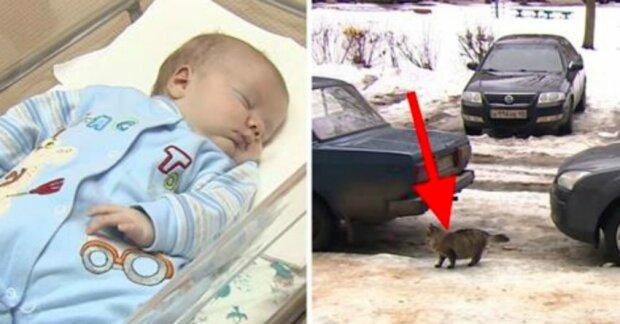 Matka odložila dítě, které by tak umrzlo. Ale podívejte se, co udělala tahle kočka