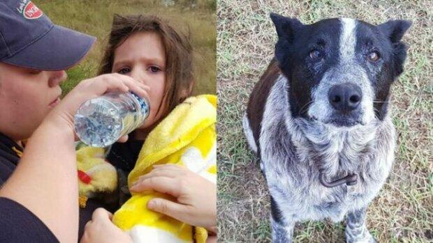 Starý a slepý pes hlídal pohřešovanou dívku 17 hodin