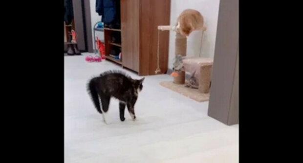 Kočka po ostříhání nepoznala kočku - reakce zvířete rozesmála síť