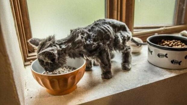 Proměna chudé kočky Barliho v nádhernou kočku