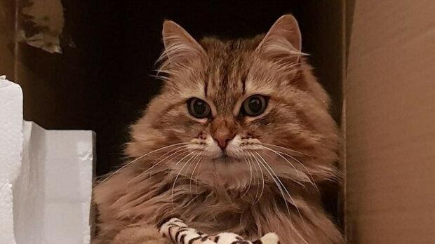 Pracovníci kavárny nešťastnou kočku často krmili, dokud mu někdo na límec nevyvěsil lístek