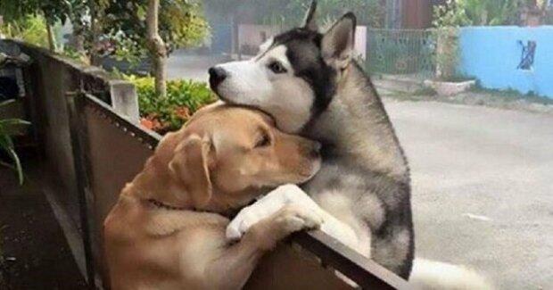 Pes neustále utíká ze svého dvorku, jen aby o kus vedle mohl přes plot obejmout svého nejlepšího kamaráda