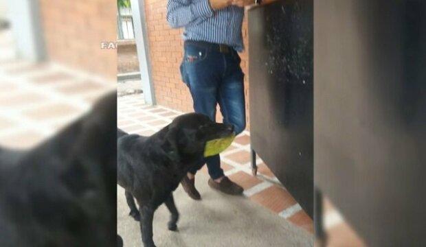 Pes si chodí do obchodu kupovat jídlo za utržené listy