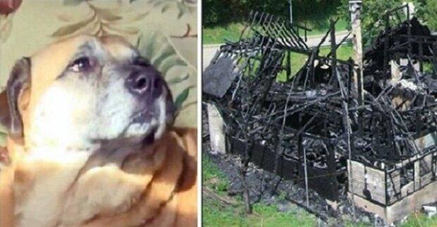 Pes zachráněný před ohněm vedl lidi k černé díře ve spáleném domě o dva měsíce později