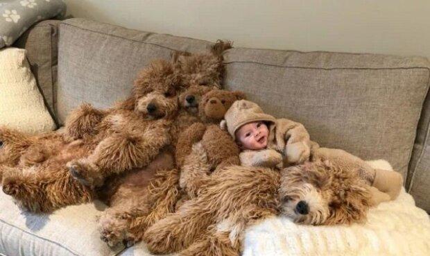 """6-měsíční dítě mezi psy """"Goldendoodle"""" se stalo hvězdou internetu"""