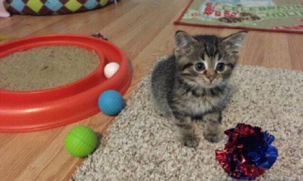 Unikátní kotě si získalo blízkého přítele, kterého nazývali jeho matkou