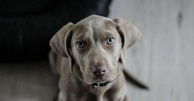 Pes nechce poslouchat výrazy svých majitelů a napodobuje je. Video