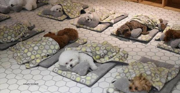 Fotografie spících štěňat ze speciální mateřské školky pro psy dobyly internet