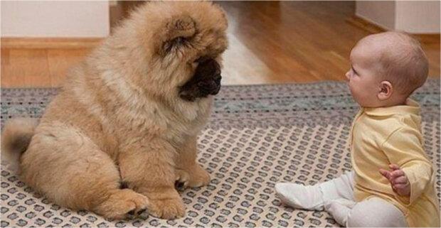 Neurolog předepsal nemocnému dítěti psa chow-chow