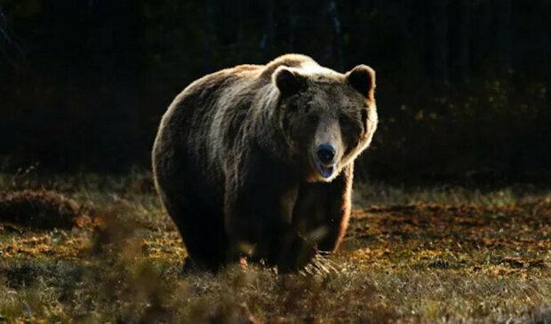 """""""Neruš svou tetu"""": medvěd vynadal mláděti, které vlezlo k lidem domů"""