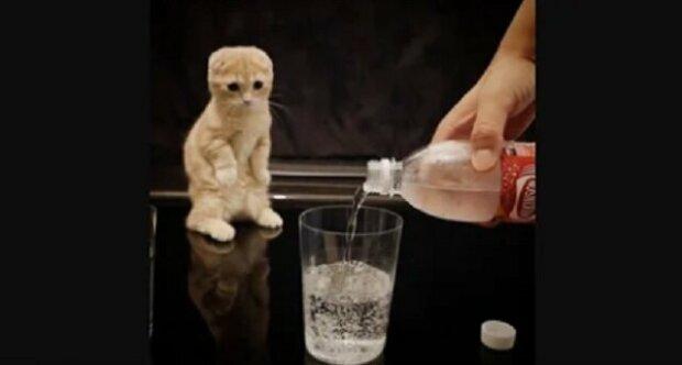 Kotě poprvé vidí perlivou vodu - jeho vtipnou reakci se podařilo natočit
