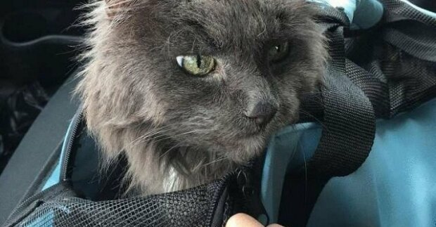 Stará kočka byla odložen do útulku. Seděl velmi tiše a byl smutný, protože nevěděl, co se bude dít dál