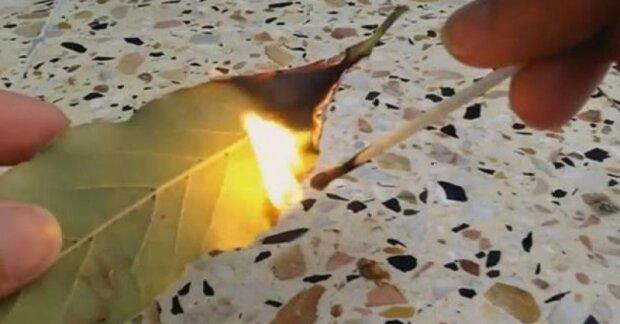 Podpal bobkový list a ponech dokud neshoří. Podívej se, co se stane ve vašem bytě v rozmezí 10 minut