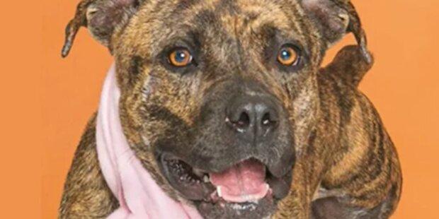 Majitel hledal ztraceného psa celý rok, než ho na Silvestra uviděl na internetu