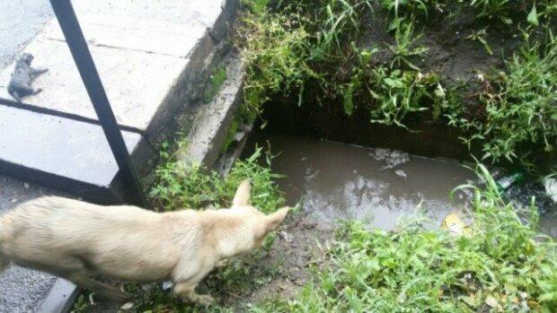 Když byla její štěňata zaplavena vodou, zavolala psí maminka kolemjdoucí na pomoc