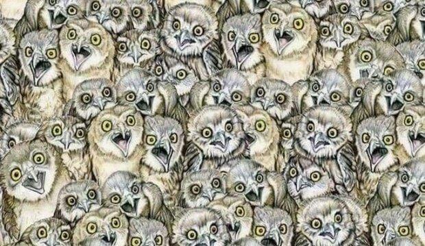 Hádanka: najděte tu kočku