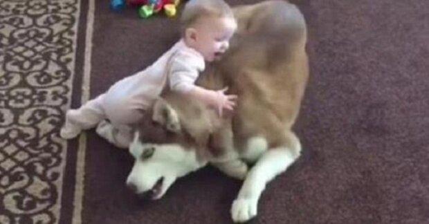 Batole vlezlo na psa. Když jsem viděl reakci zvířete, musel jsem se podívat ještě jednou