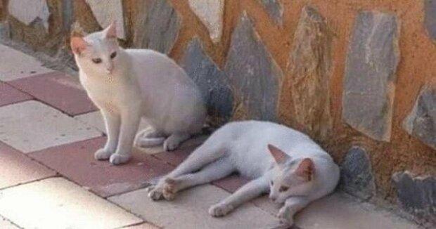 Kočka, která nikdy nezapomene
